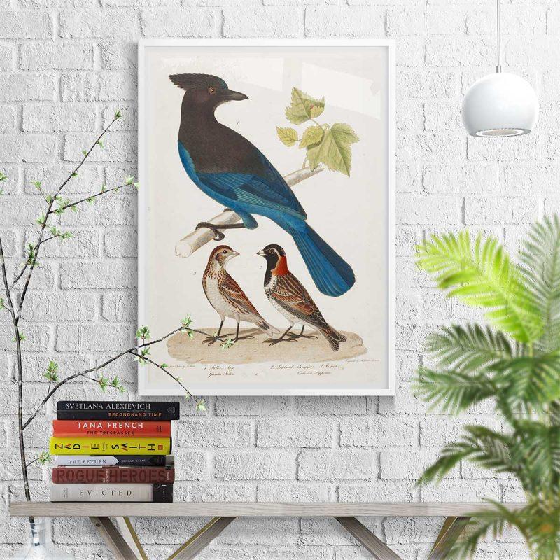 International Song Birds 23