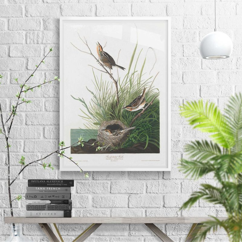 International Song Birds 67